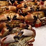 angebot-auf-dem-fischmarkt