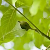 (Deutsch) CC's Momentaufnahmen - Sonntagsmission: grüne Nüsse