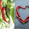 Chilis und eine längst fällige Salsa de Ají