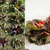 CC's Momentaufnahmen - Gartenglück und Kochbuchfreude