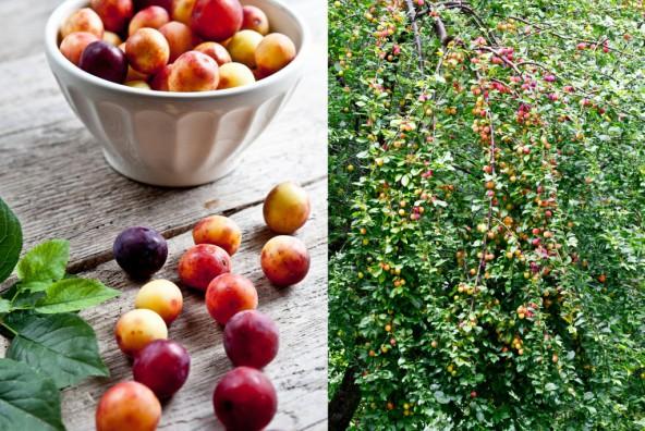 Schneller Fruchtaufstrich mit Mirabellen aus dem eigenen Garten - alltagsfreundlich