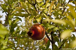 Granatapfel-7